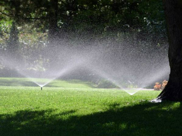 Precise irrigation systems promote healthy growth