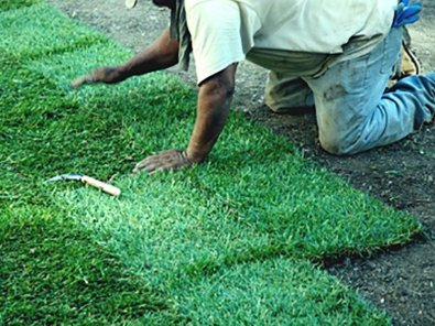 Professional sod installation services