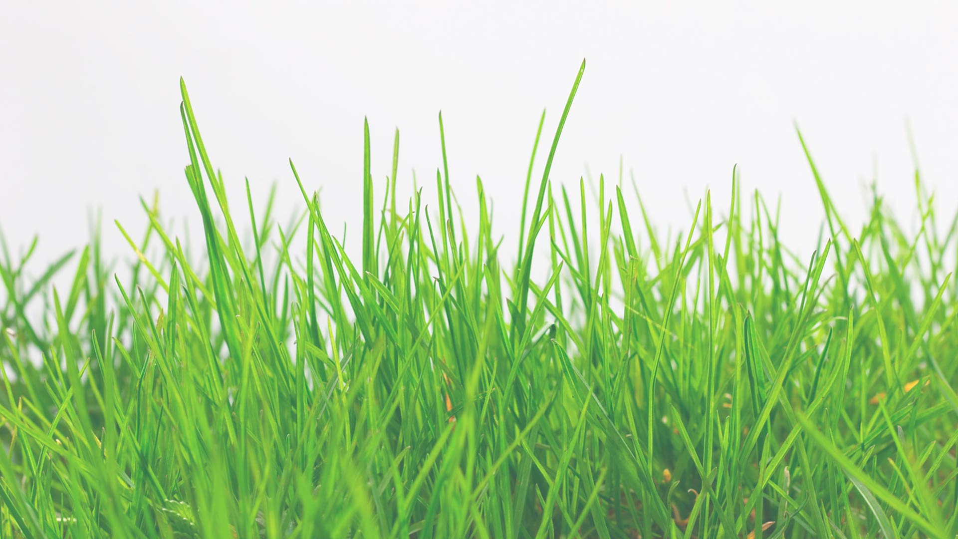 fresh-grass-background