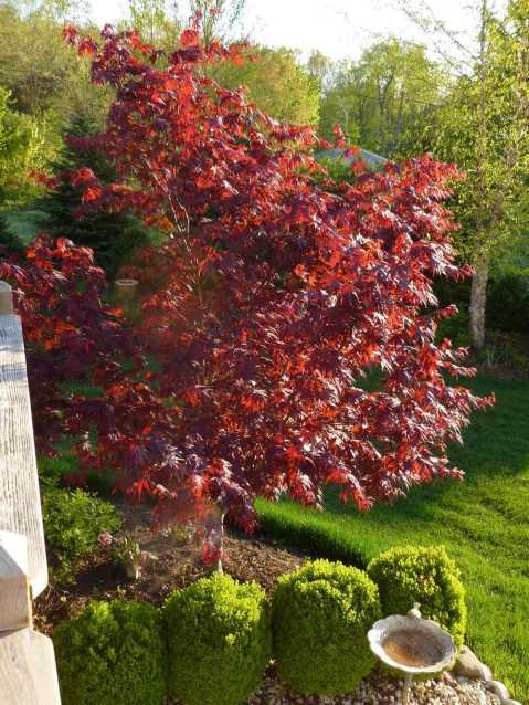 Beautiful garden in Flowery Branch GA