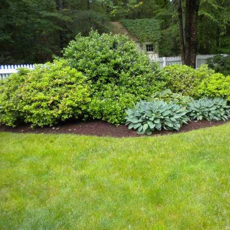 Shrub fertilization for the greenest yard on the block