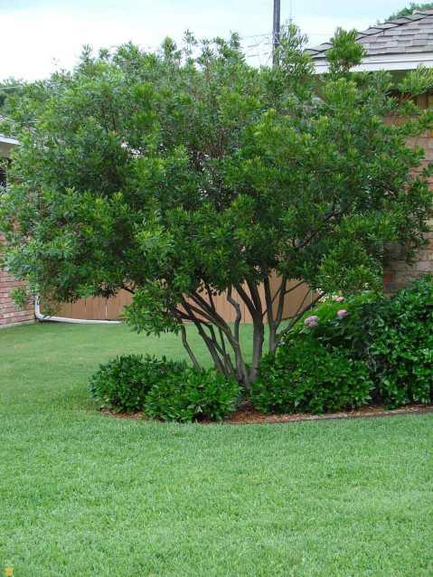 tree in lawn