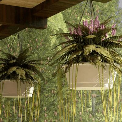 hanging plants patio