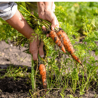 Don't forget about your vegetable garden.