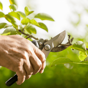 fall cleanup prune your bushes