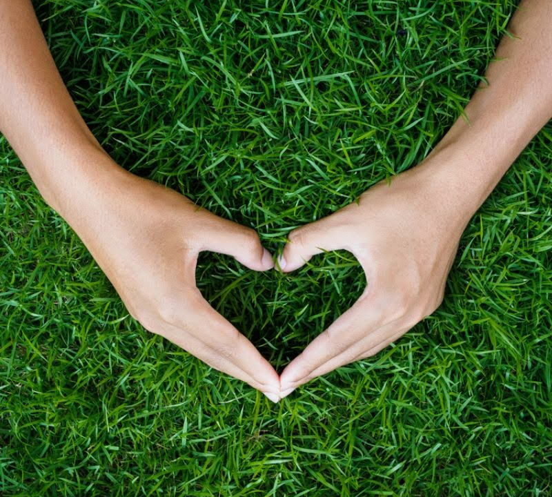 The new year lawn care strategy that you follow this year is a great way to give your lawn the love it needs to thrive.