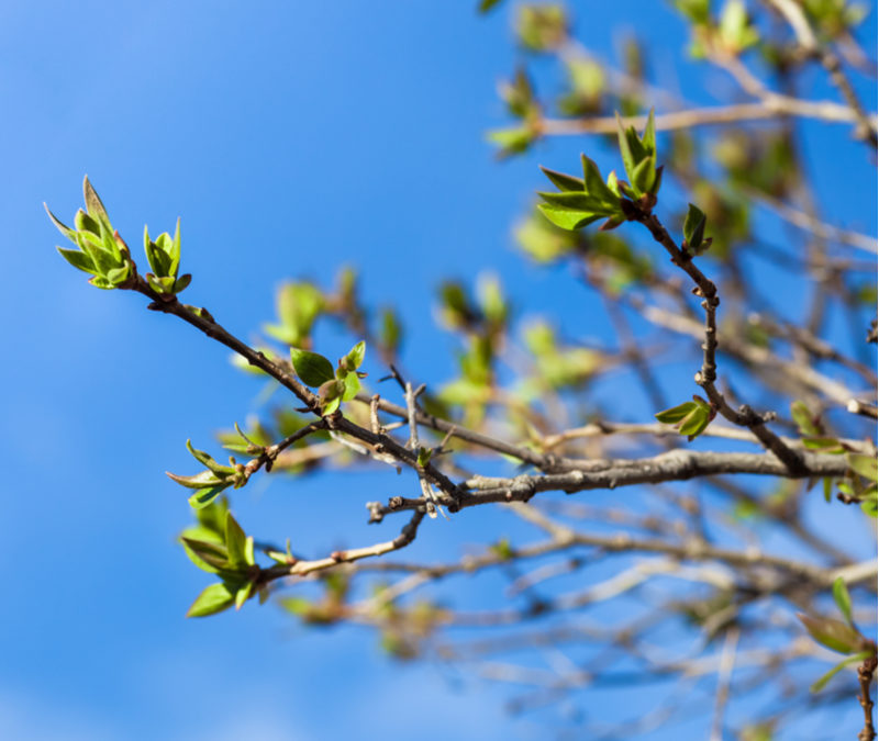 Give your Georgia trees a healthy start to the year with spring tree services from North Georgia Lawn.