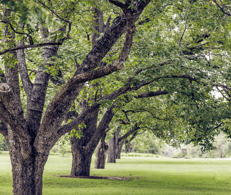 a healthy row of trees
